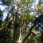 Floresta da Tijuca, Rio de Janeiro - RJ