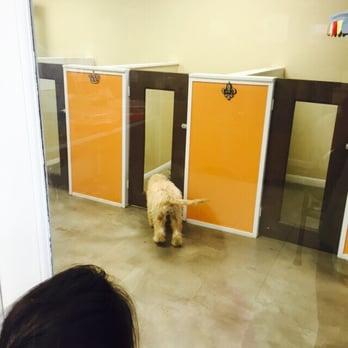 Scottie paws pet resort spa 16 photos 24 reviews for A perfect pet salon