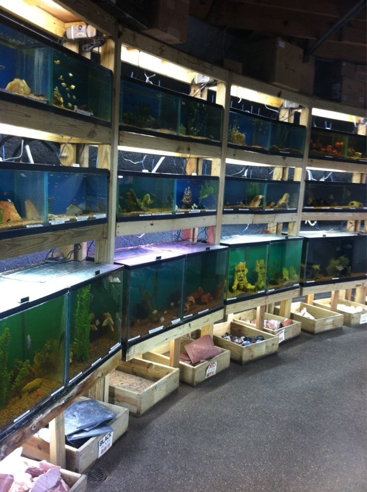 Austin Aqua Dome 19 Photos Pet Stores 1604 Fortview