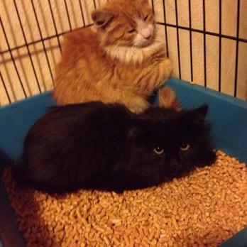 pet care veterinary center chesterfield square   los angeles ca
