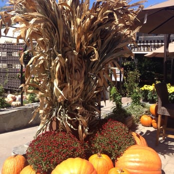 Roger 39 S Gardens Corona Del Mar Ca United States Amazing Great Pumpkin Is Here Giant Size