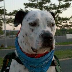 Dongan Hills Veterinary Practice Staten Island Ny