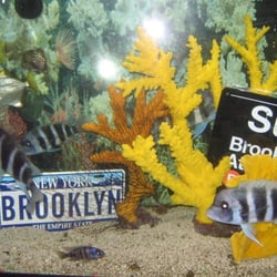 Brooklyn Zoo Aquarium Pet Store Pet Stores Bergen