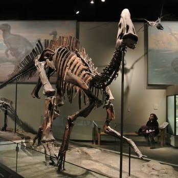 The Field Museum Amazing Dinosaur Exhibits Chicago