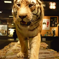 Zoologisches Museum, Hamburg