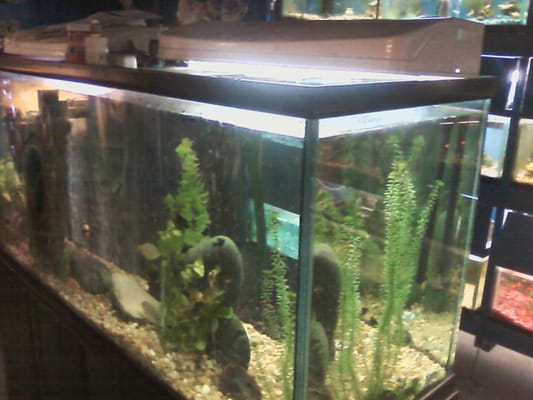 Big fish little fish pet stores somerville ma for Fish stores in ma