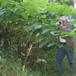 Hier der Busch mit den großen Blättern…