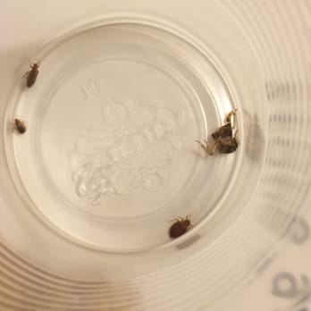 Excalibur Hotel Reviews Bed Bugs