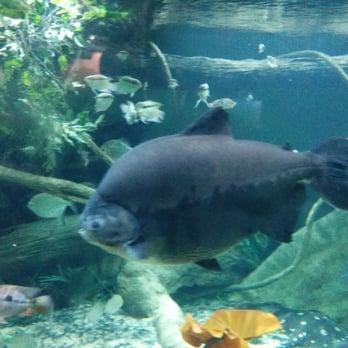 The New York Aquarium 419 Photos 312 Reviews Zoos