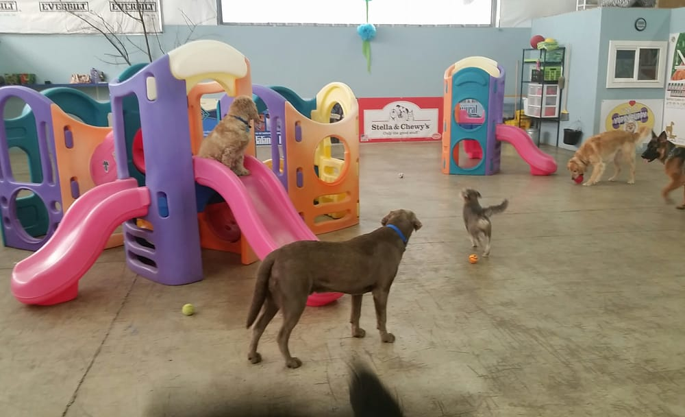Big dog/Community Doggie Day Care indoor play space. 05/11/2015 | Yelp