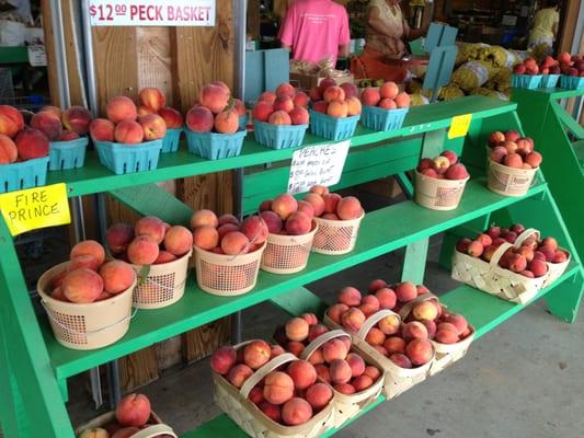 Sustainable Farming in Alto: Jaemor Farms
