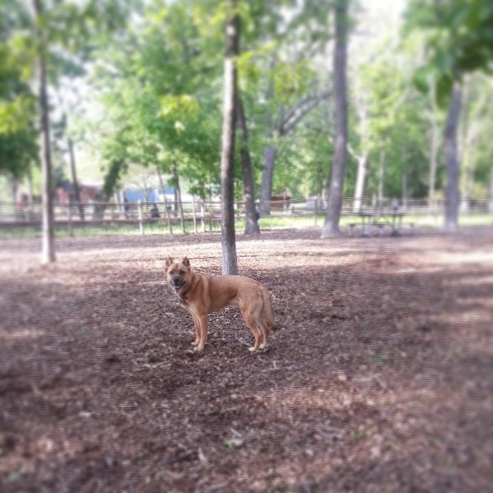 Dog Park Oaks Pa