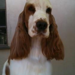 Dog Grooming Bakersfield Ca