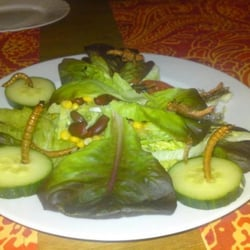 """""""Großer"""" gem. Salat mit Heuschrecken und…"""