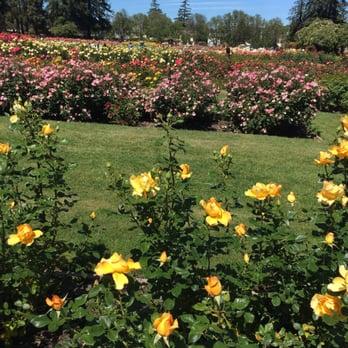 San Jose Municipal Rose Garden 1197 Photos 277 Reviews