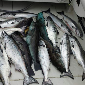 Albacore fishing trips bodega bay for Bodega bay fishing charters