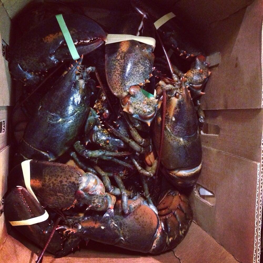 The new fulton fish market seafood markets bronx ny for Fish market bronx