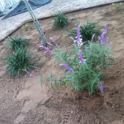 Abescape Landscaping Tree Services El Paso Tx