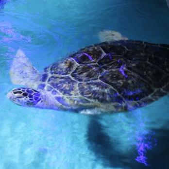 National Aquarium 678 Photos Aquariums Inner Harbor