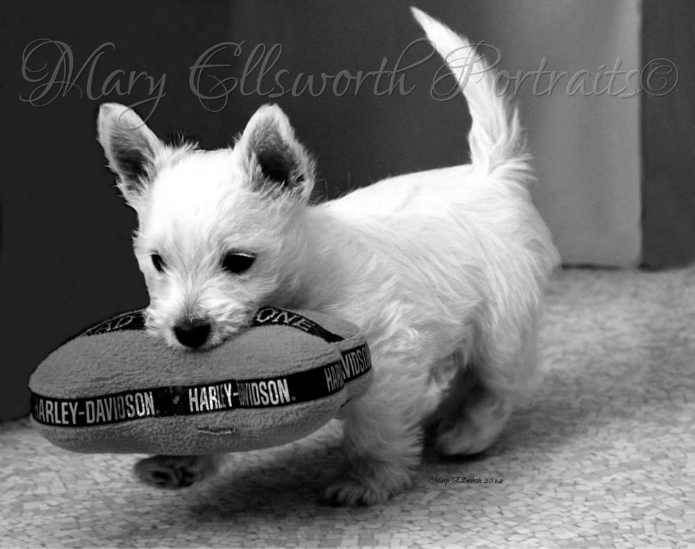 mary s dog grooming and photography   pet groomers
