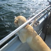 Emeryville Sport Fishing - The captain's Golden Lab was great.  She loved watching fish being reeled in and would hang over the gunwhale to watch. - Emeryville, CA, Vereinigte Staaten