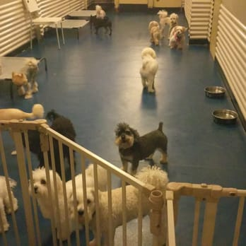 South park doggie daycare boarding grooming 66 photos for Dog boarding los angeles