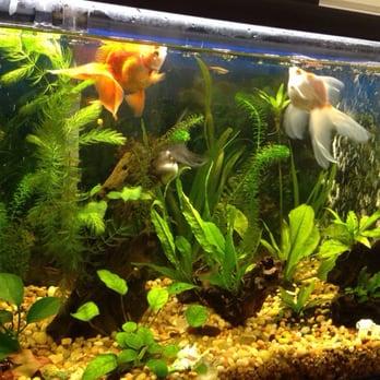 Rosemead Aquarium