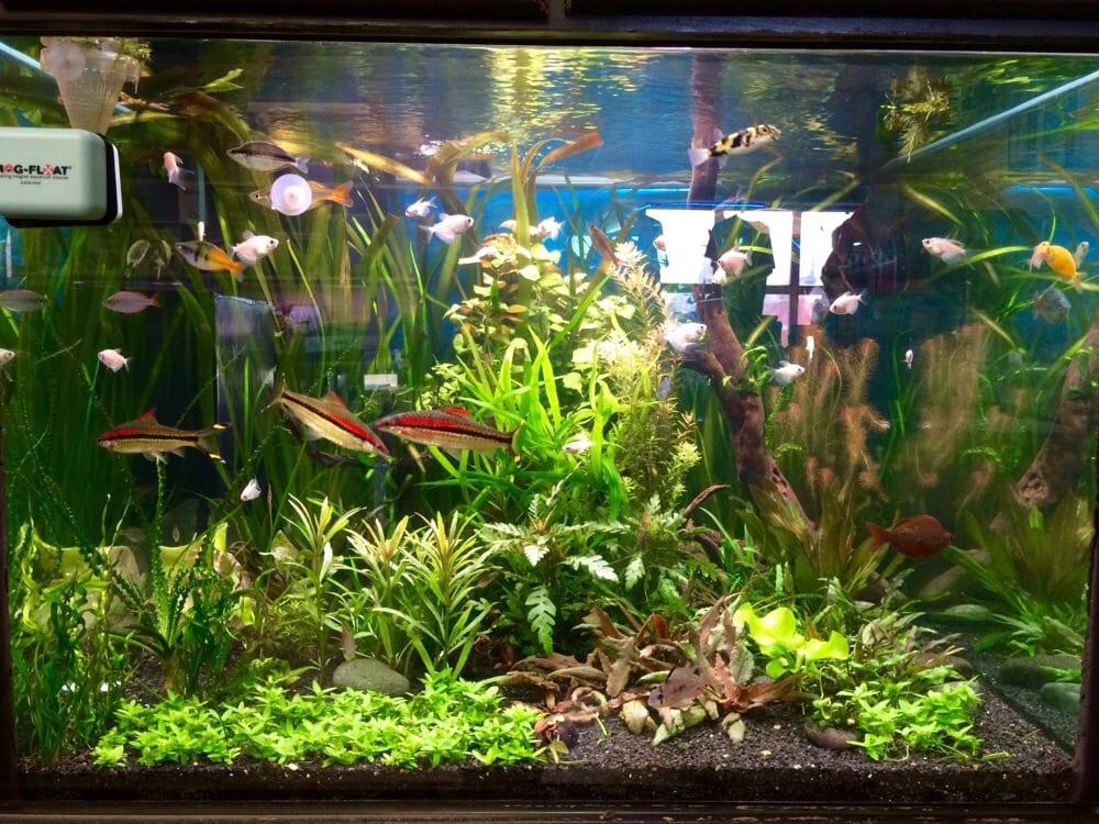 Freshwater Community Tank Yelp