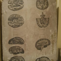 Piedra litográfica con dibujos…