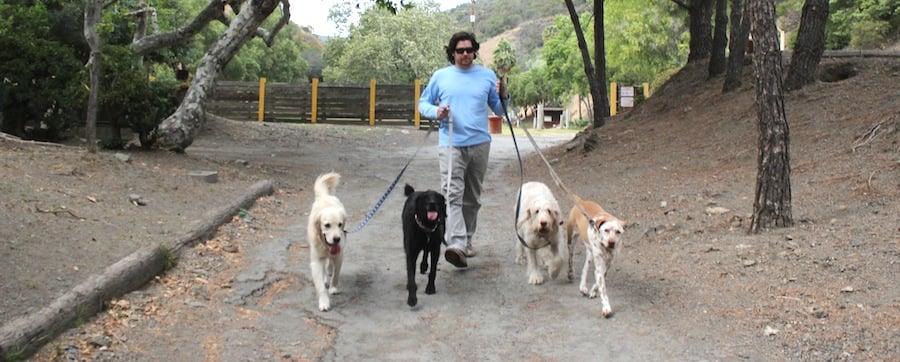 Johnny walker walks dog walkers santa monica santa for Dog boarding santa monica