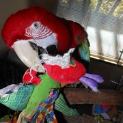 Squawk and Howl - My favorite toy! - South San Francisco, CA, Vereinigte Staaten