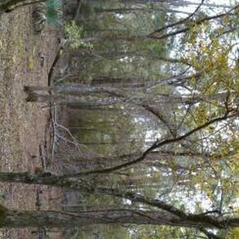 Mercer Arboretum And Botanic Gardens 131 Photos 38 Reviews Parks Humble Tx Phone