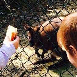 african safari zoo plaisance du touch haute garonne