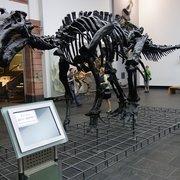 well hello, iguanodon!