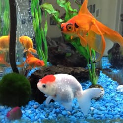 Pet zone tropical fish pet stores san diego ca for Fish store san diego