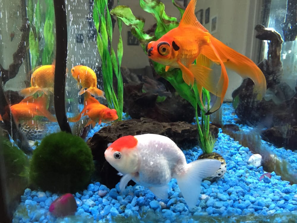 Pet zone tropical fish pet stores san diego ca for Fish store san francisco