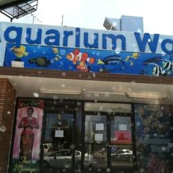 aquarium store 90025 oranda aquarium aquarium services