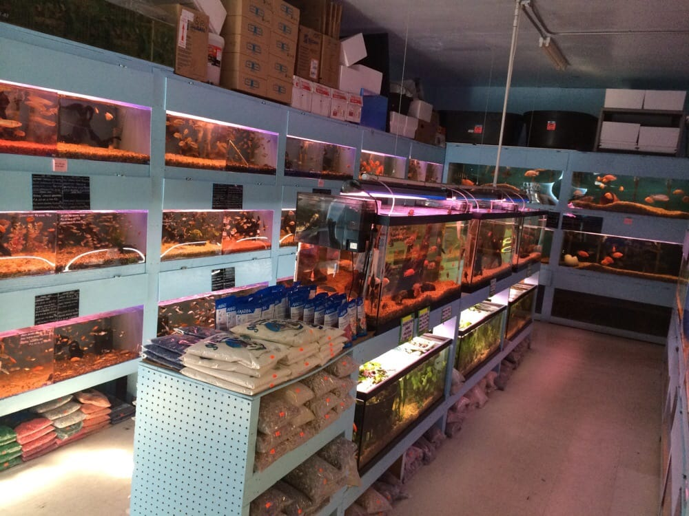 The Aquarium In The Back Of The Store A Lot Of Variety Of