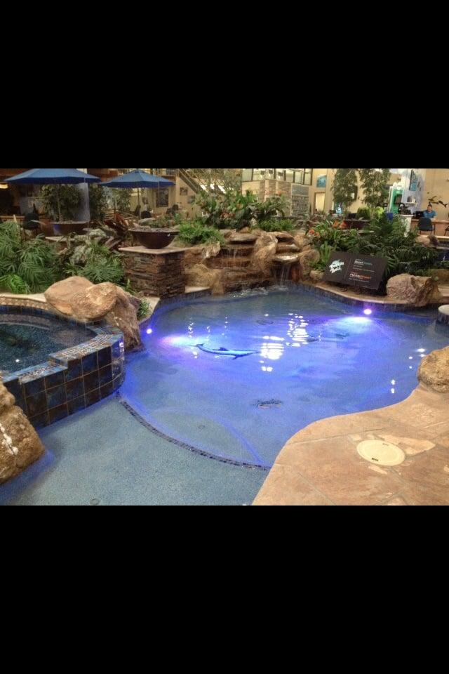 Dolphin pools spas 15 photos swimming pools - Swimming pool contractors phoenix az ...