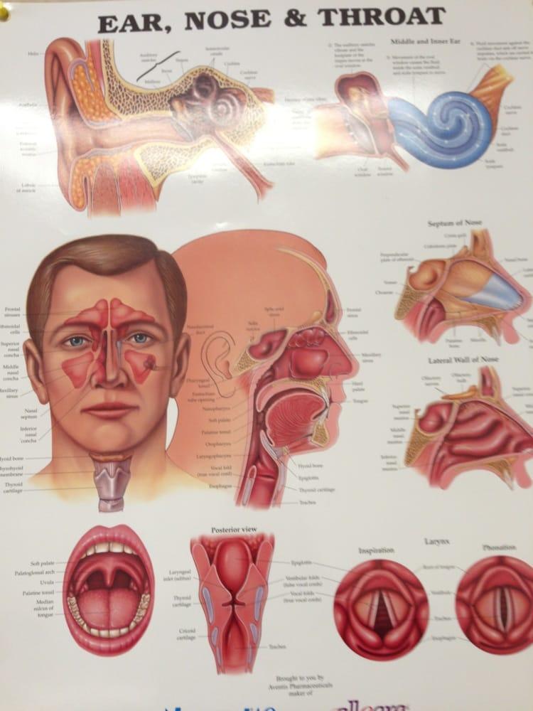 Чем связаны ухо горло нос