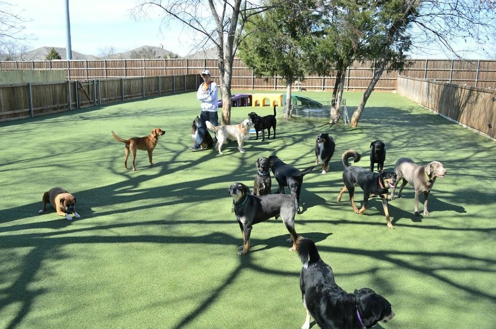 Bark Hotel For Dogs Reviews