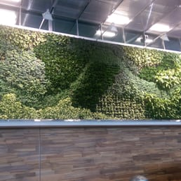Plants grown on the wall