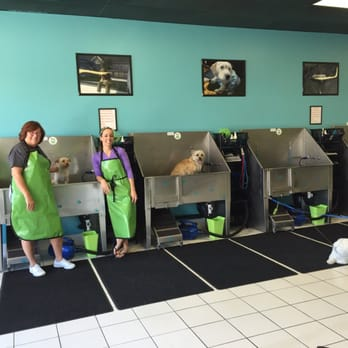 self service dog wash business plan