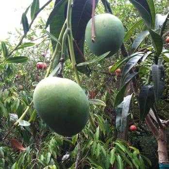 exotica rare fruit nursery dried fruits
