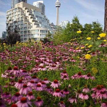 Toronto Music Garden Toronto On Canada Yelp