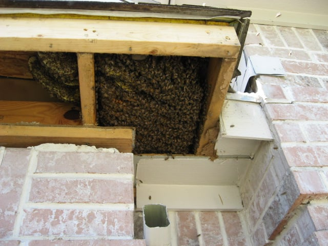 how to get rid of honey bees in my house