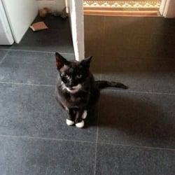Edinburgh Cat Protection League Casselbank Street