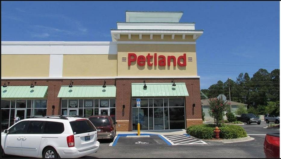 petland   50 photos   pet stores   southside
