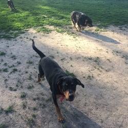 Schweitzer Woods Dog Park - My boy Sisqo - West Dundee, IL, Vereinigte Staaten