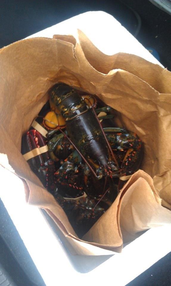 S S Lobster Ltd Fitchburg Ma Live lobsters |...